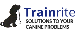 TrainRite Dog Training & Behaviour